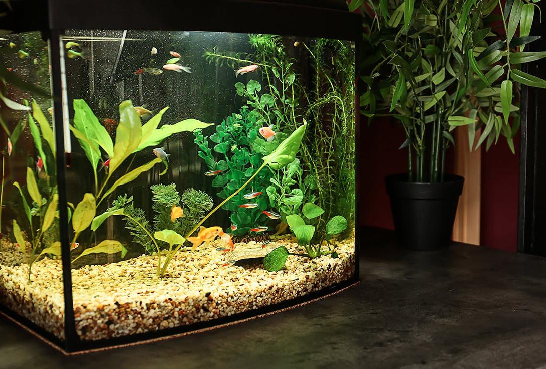 Aquarium Starterset