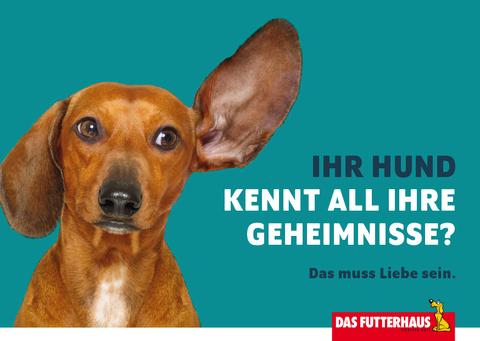 Ihr Hund kennt all Ihre Geheimnisse? - eCard
