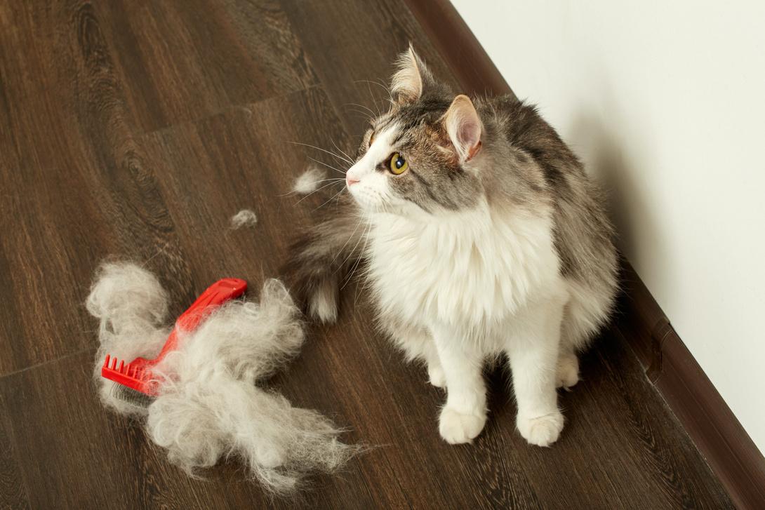Haarausfall bei Katzen - Ursachen & Tipps