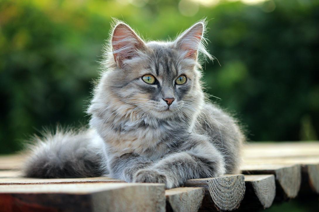 Die Lebensphasen einer Katze