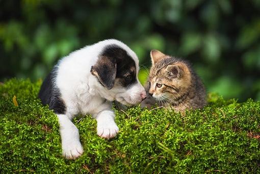 Die Tier-Wg - Harmonisches Zusammenleben