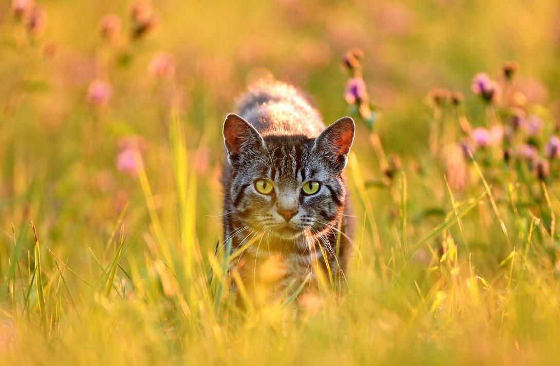 Die Körpersprache der Katzen
