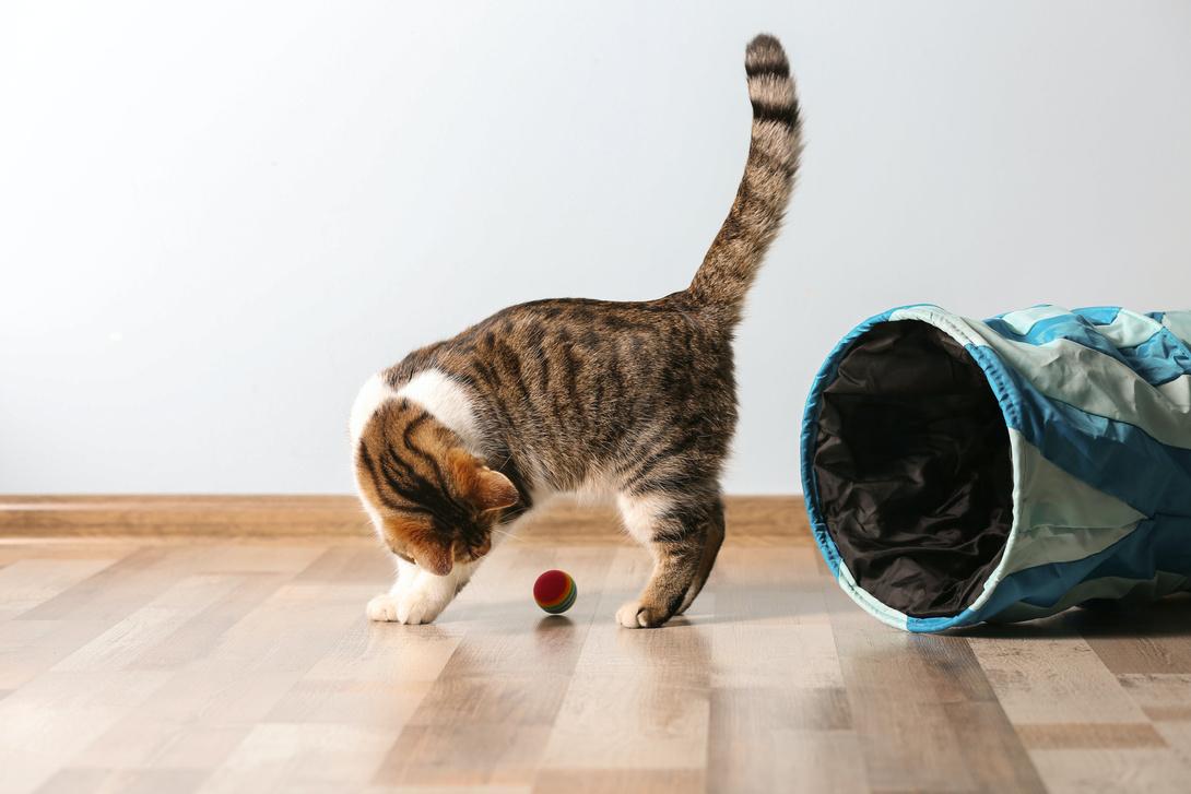 Spielzeit - Darum müssen Katzen spielen