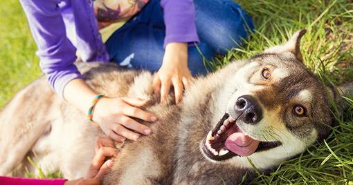 Gesundheitscheck der Augen für Hunde