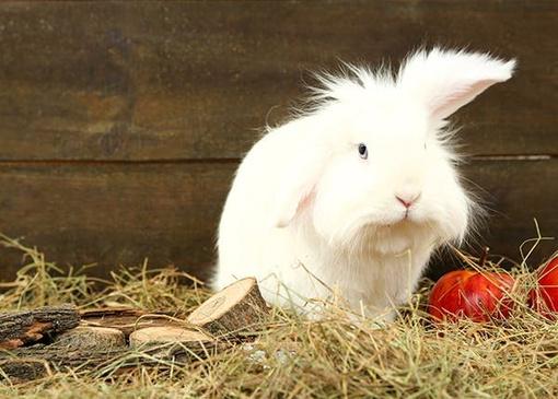 Kaninchen im Stroh
