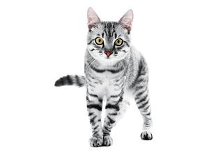 DRAFT Katzen Futter