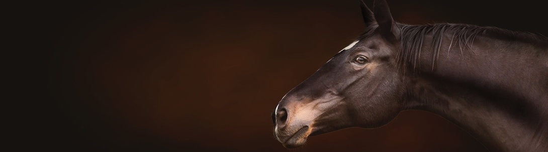 Tierische Tipps für Pferde