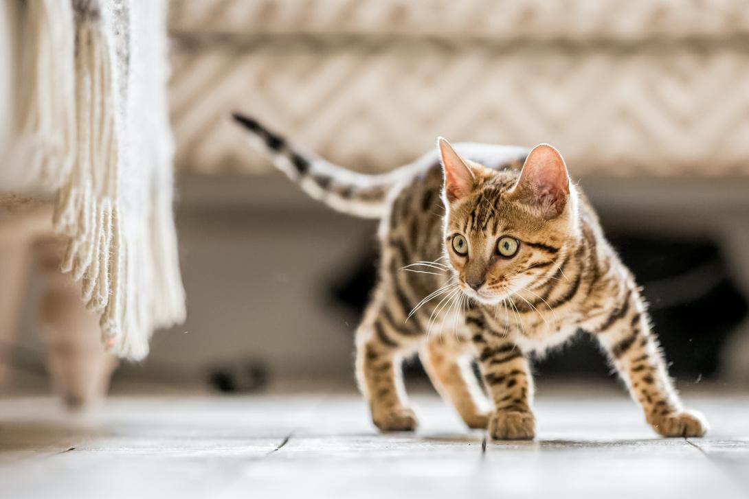 Katzen werden erwachsen