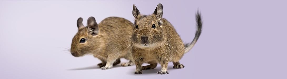 Tierische Tipps für Kleintiere