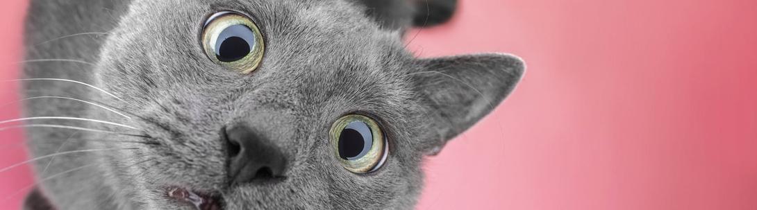 Tierische Tipps für Katzen