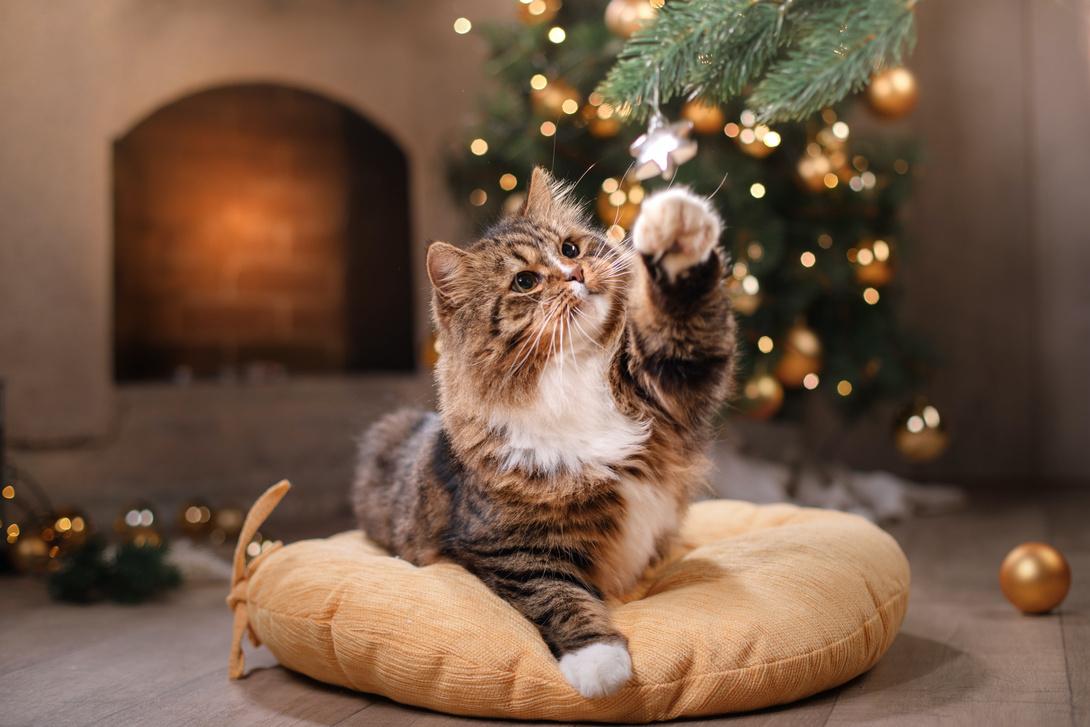 Katze vor Weihnachtsbaum