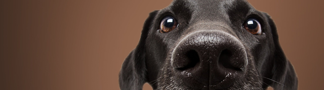 Tierische Tipps für Hunde