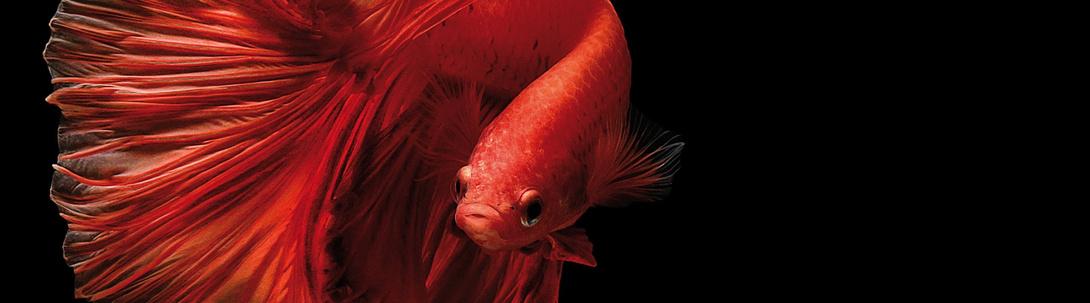 Tierische Tipps zur Aquaristik