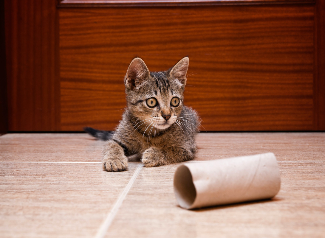 Spielkram für die Katze
