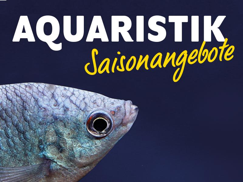 Aquaristik-Angebote 2021