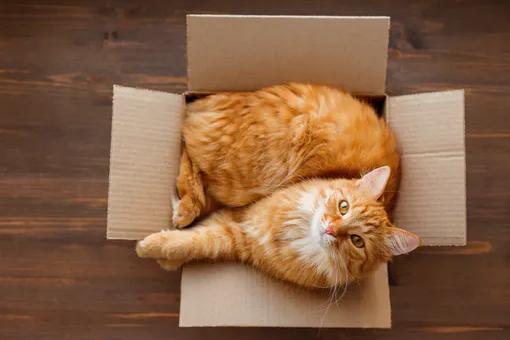 DASFUTTERHAUS Erstausstattung für Katzen