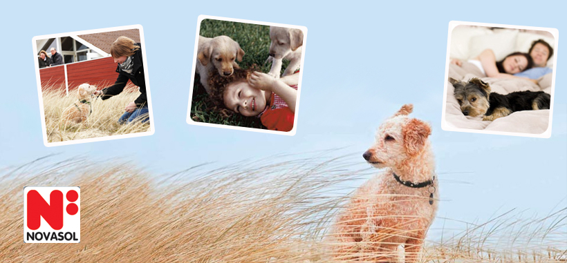 Novasol: Urlaub mit Hund