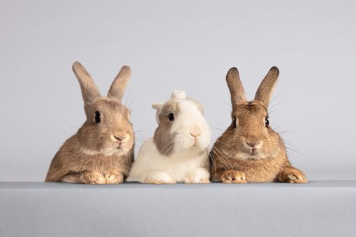 Tipps für das Kaninchengehege im Winter