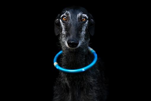 Hunde-Sichtbarkeit im Dunkeln