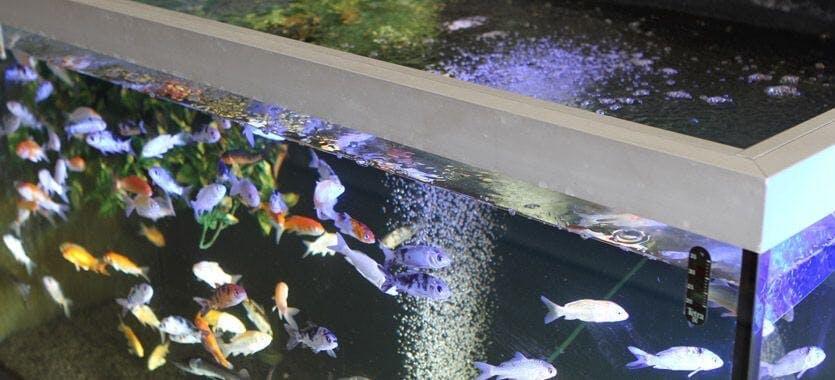 Säuberung eines Filters im Süsswasseraquarium