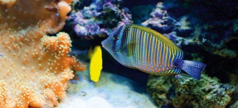 Einstieg in die Meerwasseraquaristik