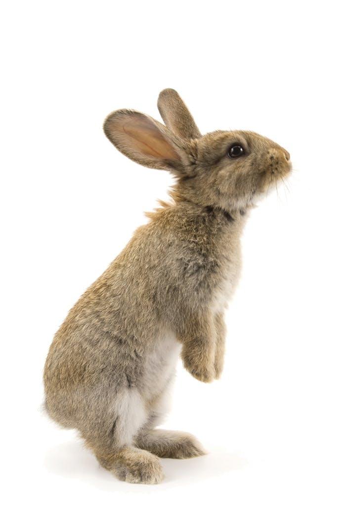 Kaninchen Erstausstattung