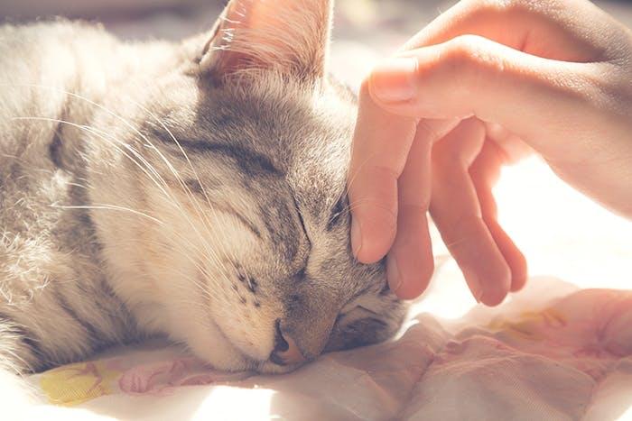 Allergien bei Katzen - Ursachen & Tipps