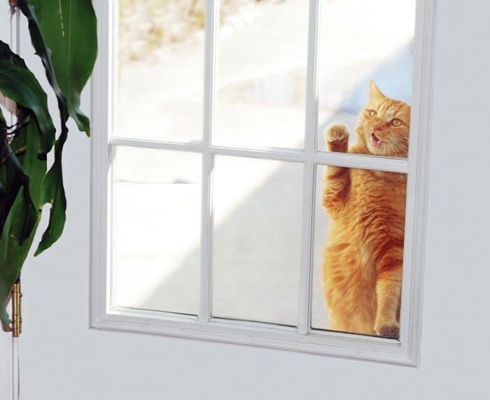 Katzenklappen für flexiblen Ausgang der Katze