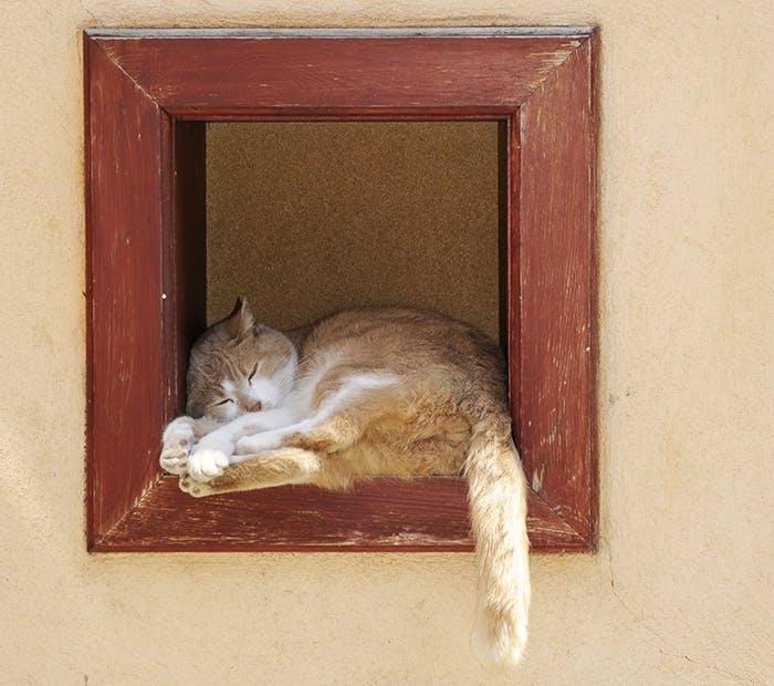 Hochsommer mit Katze