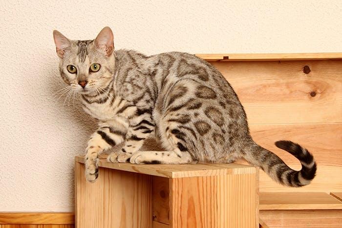 Der Wohnraum sollte katzenfreundlich gestaltet sein