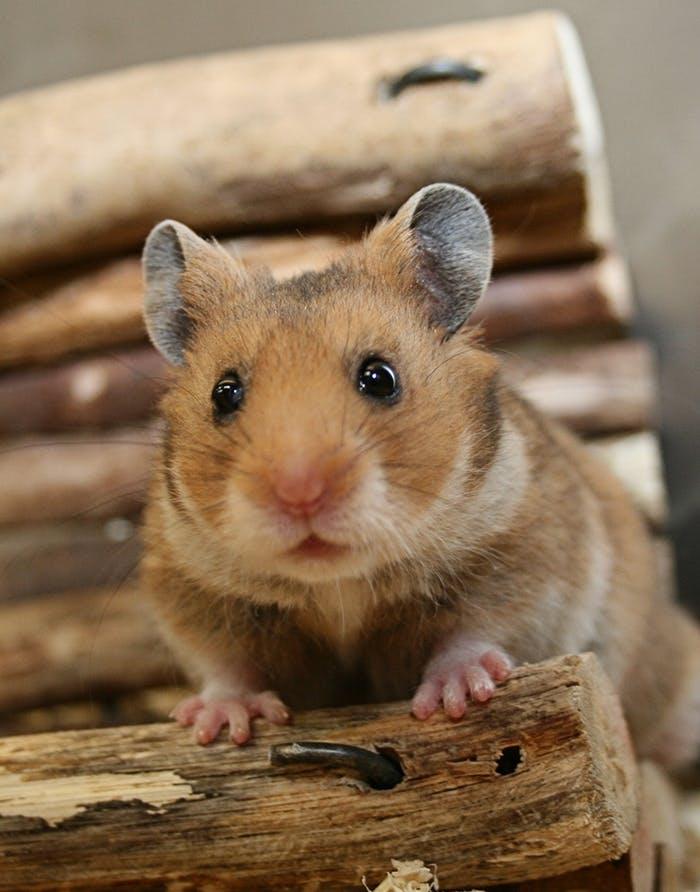 Hamster Erstausstattung