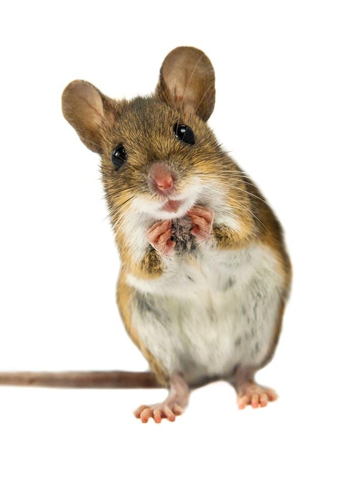 Erstausstattung für Mäuse
