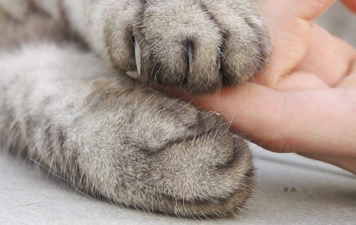 Katzen putzen ihre Tatzen