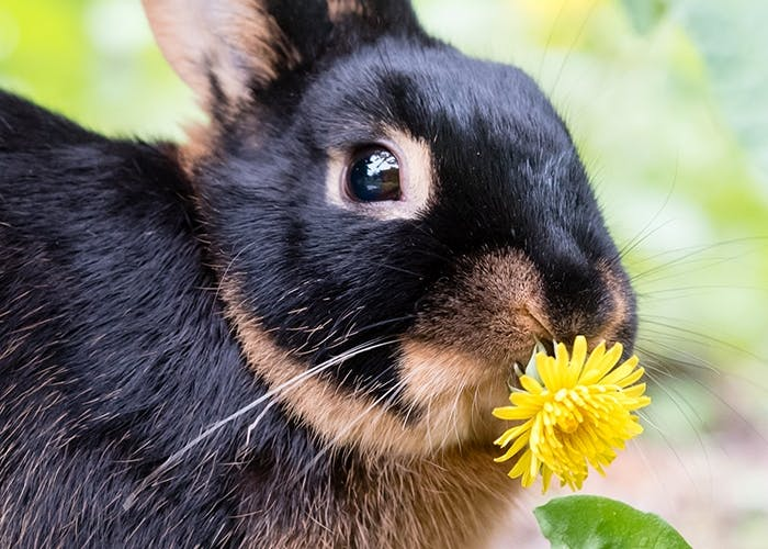 Tipps für die richtige Kaninchenhaltung