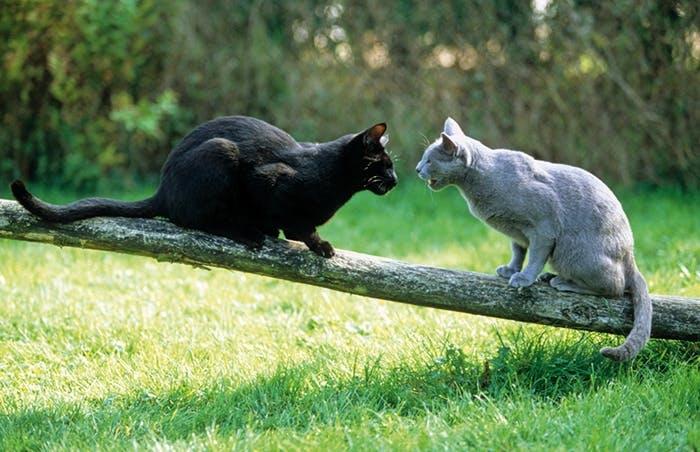 Stromern in der Nachbarschaft - Das darf Ihre Katze