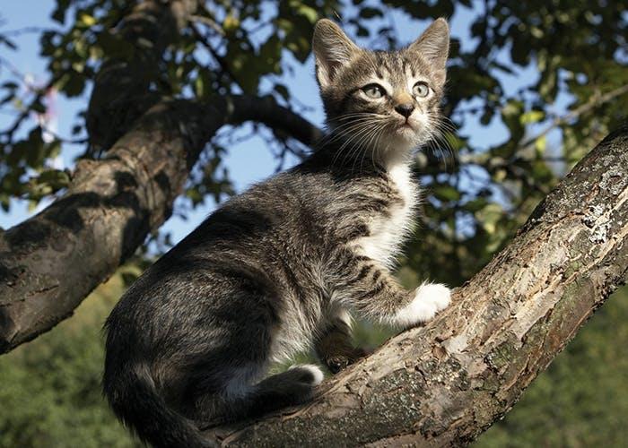 Freigang für Katzen - Was zu beachten ist