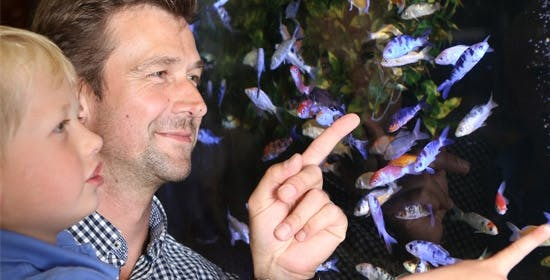 Aquaristik Tipps für Einstieger