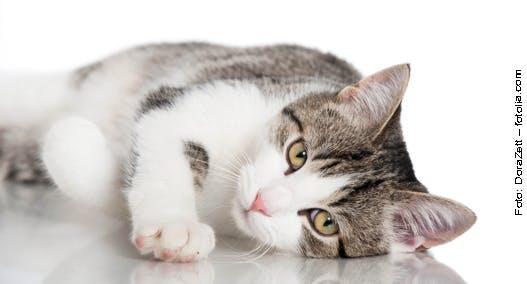 Katzengesundheit auf Fell und Pfoten prüfen