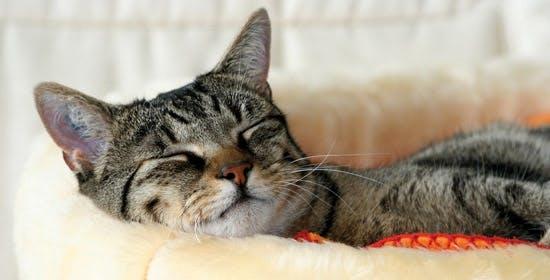 Diätfutter für Katzen mit Übergewicht