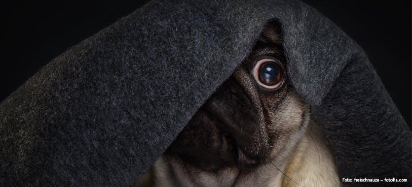 Ängste bei Hunden