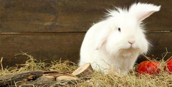 Zahnpflege für Kaninchen