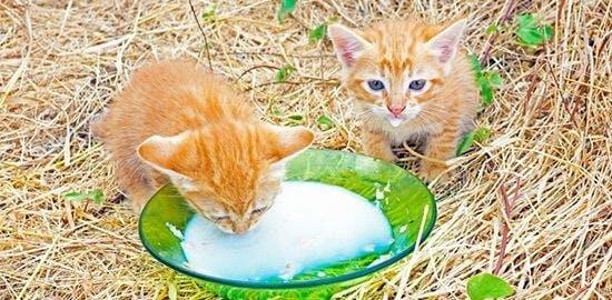 Spezielle Nahrung für Babykatzen