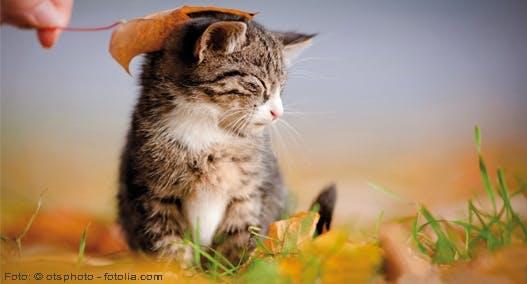 Eine Liebeserklärung an die Katze