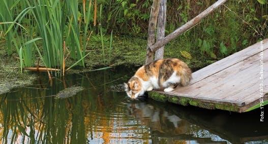 Rechtslage bei Schäden durch Katzen