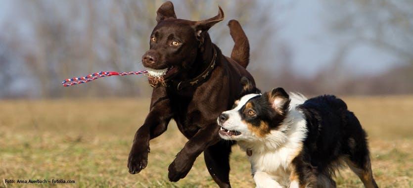 Tipps für die Hundewiese