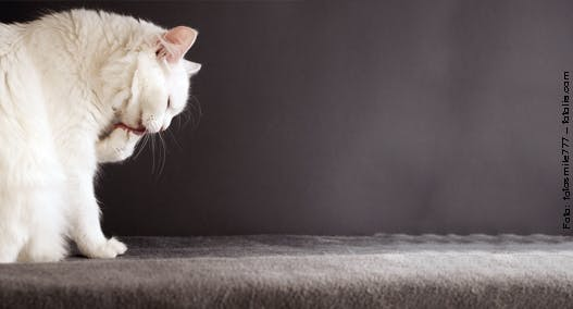 Hautprobleme und Fellprobleme bei Katzen