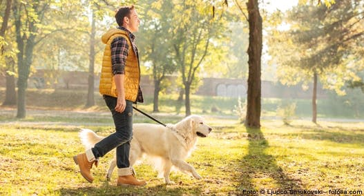 Leinentraining für den Hund