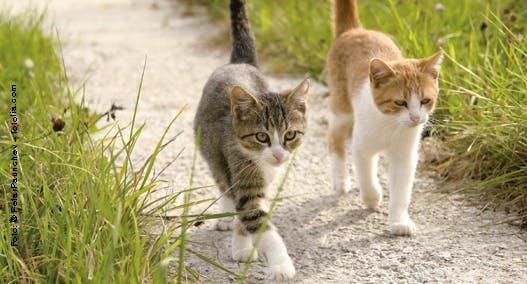Die unterschiedlichen Charaktere von Katzen