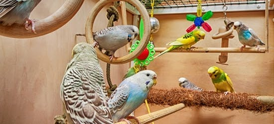 Sitzstangen mit Ziervögeln