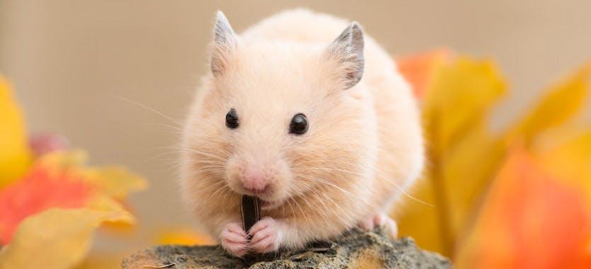 Die richtige Beschäftigung für Hamster